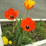 18-04-06-12-42-42-541_photo