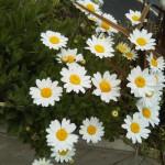 18-04-06-12-44-01-613_photo